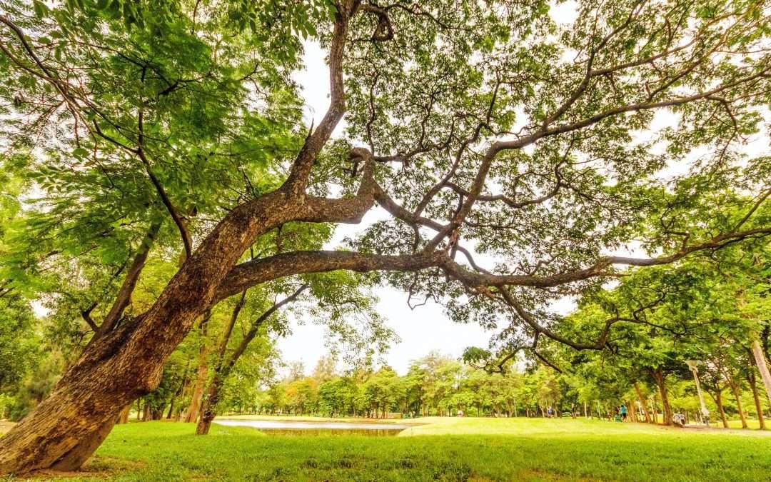 Gli effetti benefici della natura: scopriamo quali sono