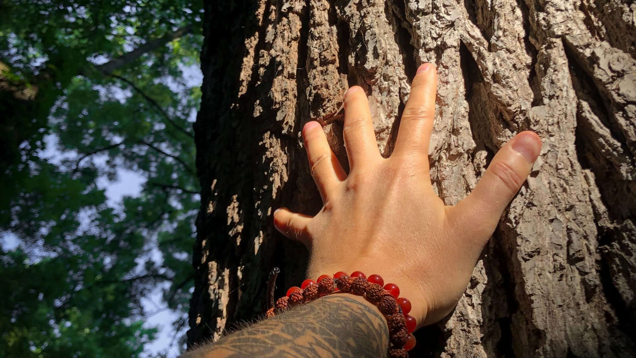 Scopri il potere magico del bosco accarezzare